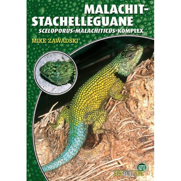 Art für Art - Malachit-Stachelleguane