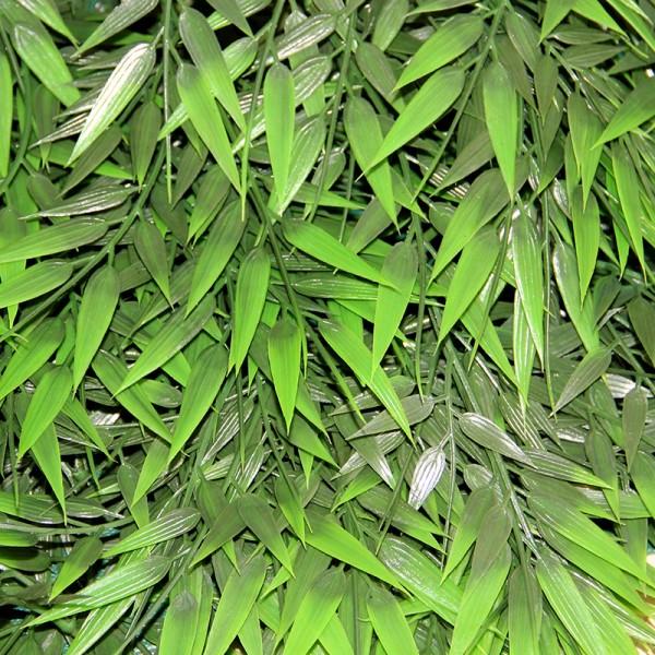 Terrarium Plants - Big Bamboo Rattan - Small