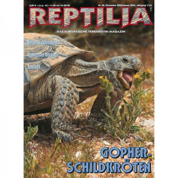 Reptilia 62 - Gopherschildkröten