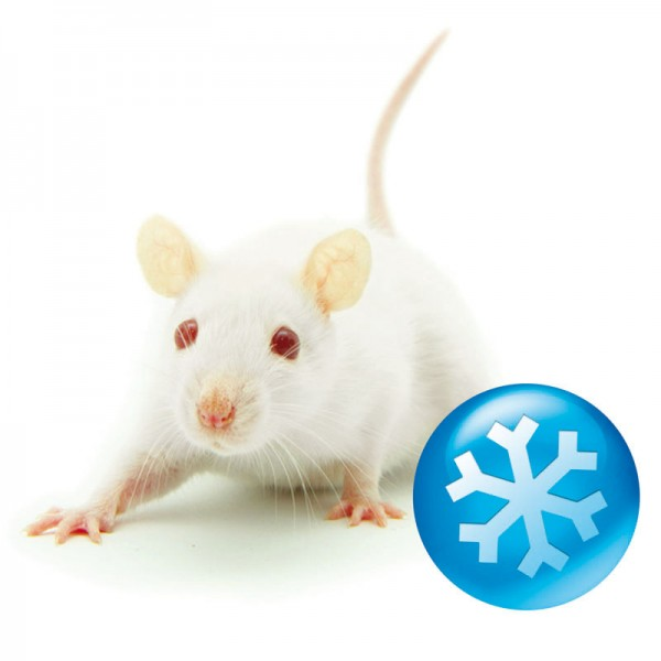Frost - Maus adult - 50 Stück