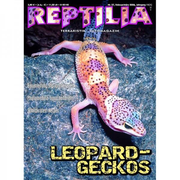 Reptilia 57 - Leopardgeckos