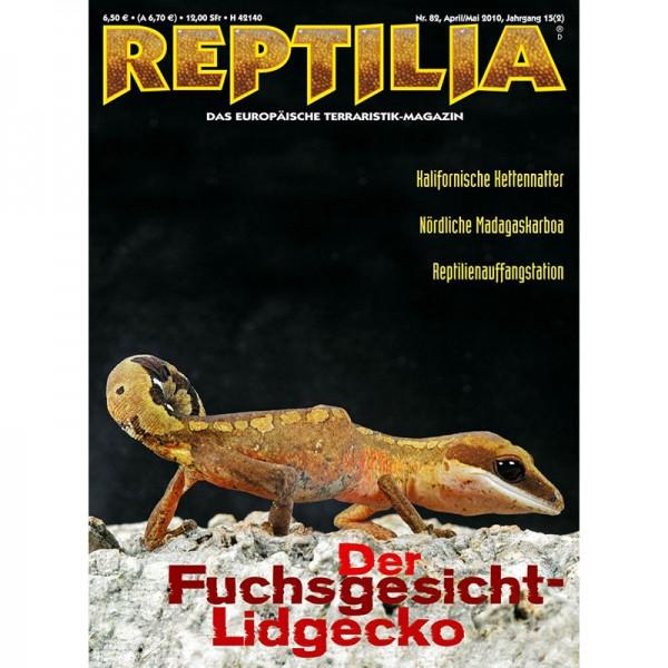 Reptilia 82 - Der Fuchsgesicht-Lidgecko