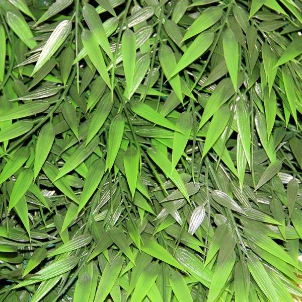 Terrarium Plants - Big Bamboo Rattan - Medium