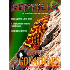 Reptilia 78 - Neotropische Taggeckos