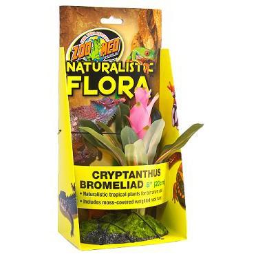 Naturalistic Flora - Cryptonihus Bromeliad
