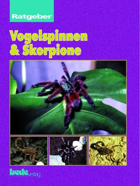 Ratgeber : Vogelspinnen und Skorpione