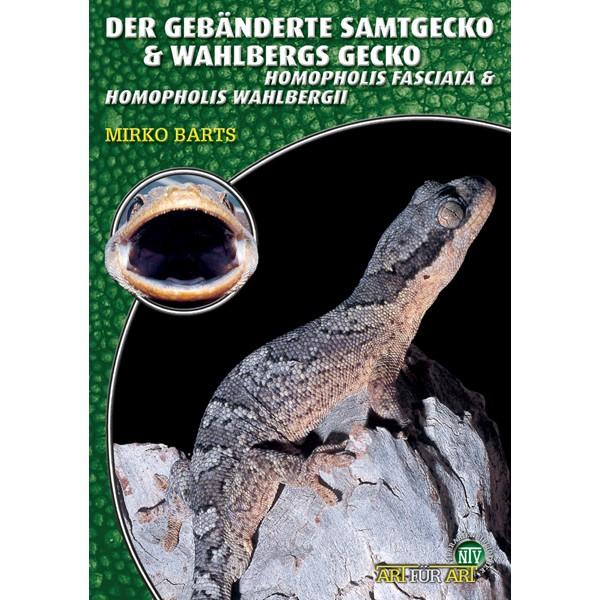 Art für Art - Der Gebänderte Samtgecko & Wahlbergs Gecko