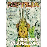 Reptilia 37 - Dreihornchamäleons
