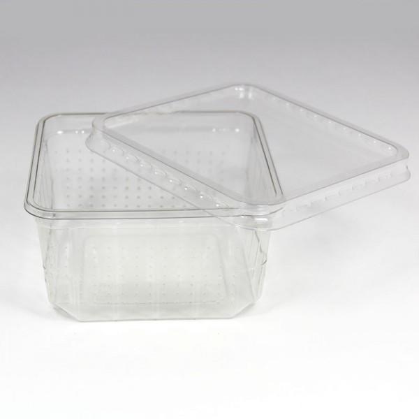 Heimchendose transparent gelocht mit Deckel