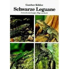 Schwarze Leguane - Freilandbeobachtungen, Pflege und Zucht