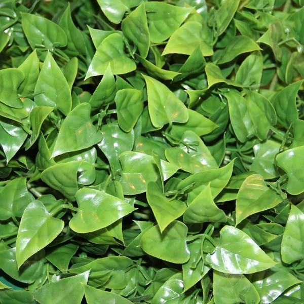 Terrarium Plants - Evergreen Vine - Small