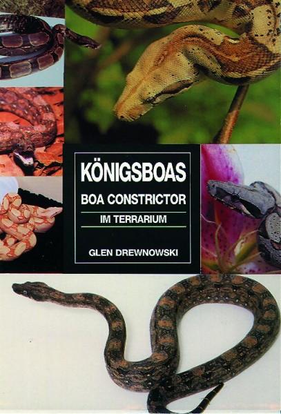 Königsboas - Boa Constrictor im Terrarium